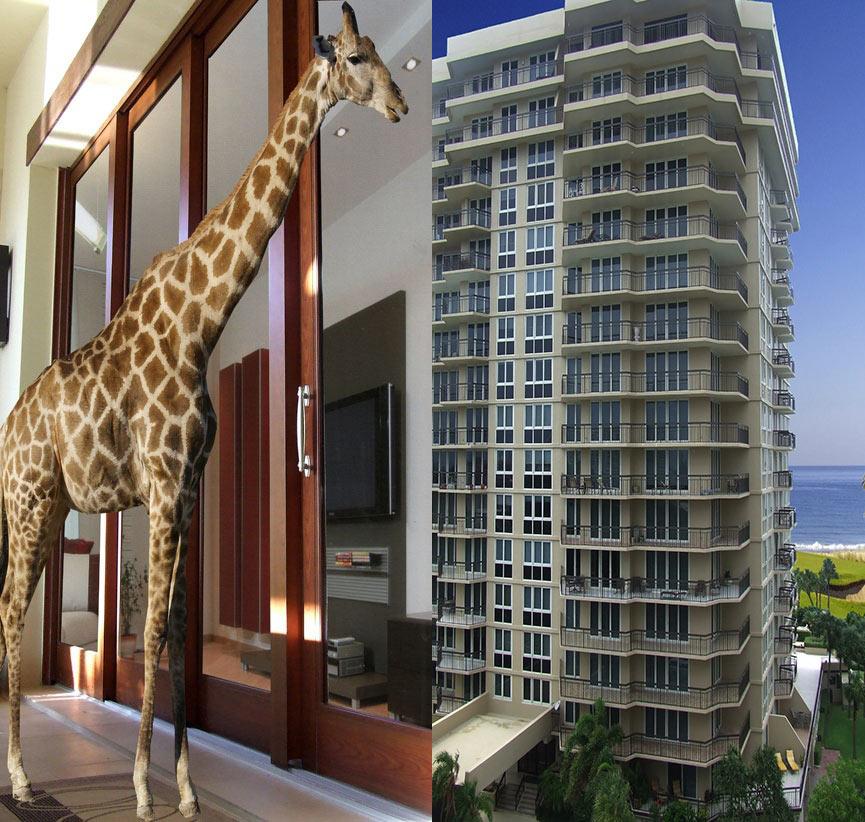 giraffe-building